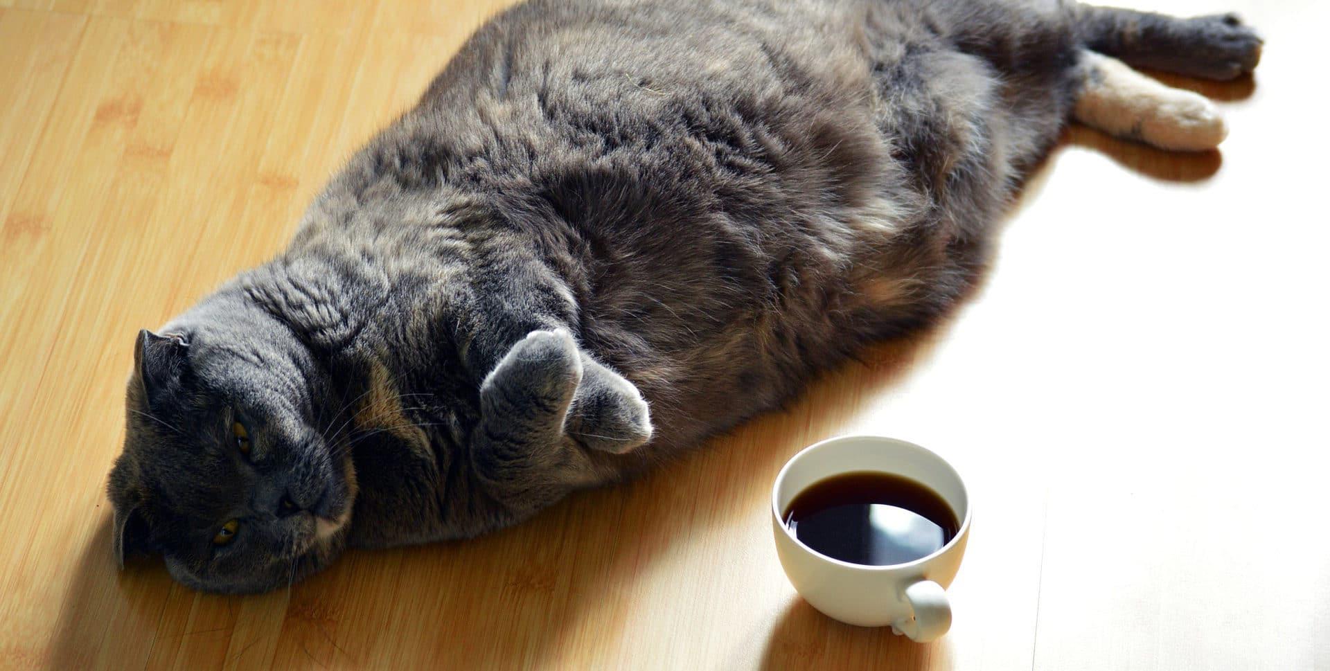 Motivation und Eigenschaften: Ob hier wirklich mehr Kaffee die Lösung ist?
